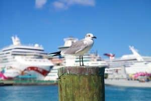 Cruise Schedule Nassau, Bahamas 2019-2020