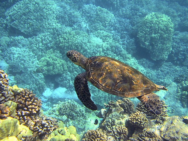Hawaii excursions and tours - Turtle