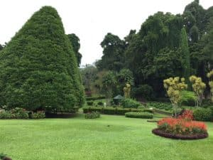 Botanical garden of Kandy, Sri Lanka