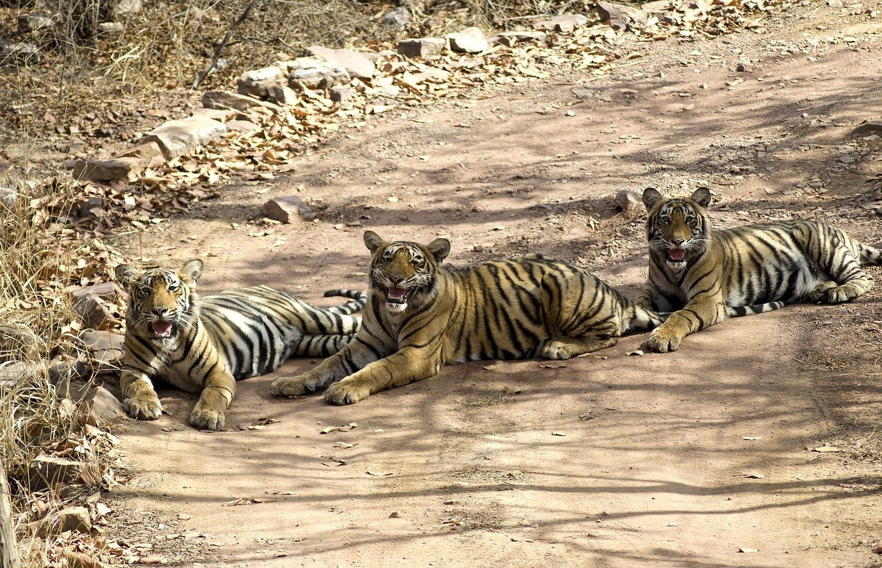 Ranthambore One Day Safari from Jaipur