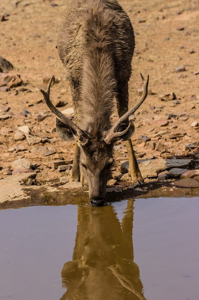 One day Ranthambore Tiger Safari